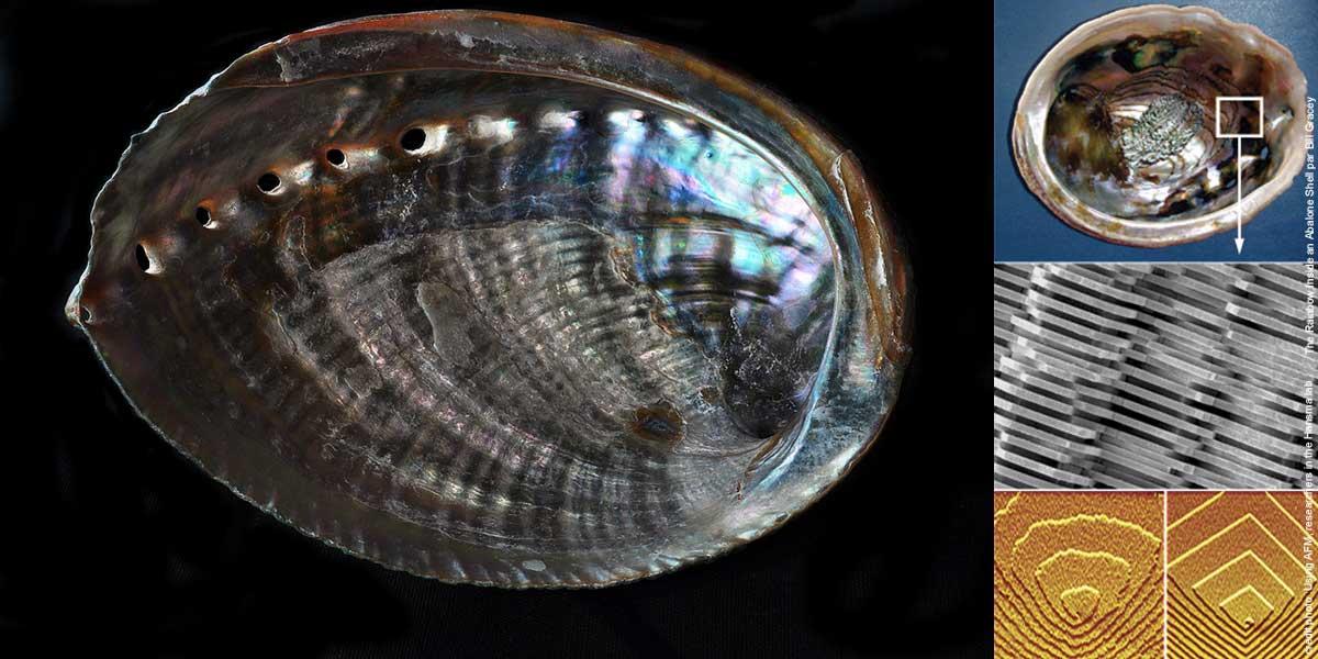abalone-application.jpg