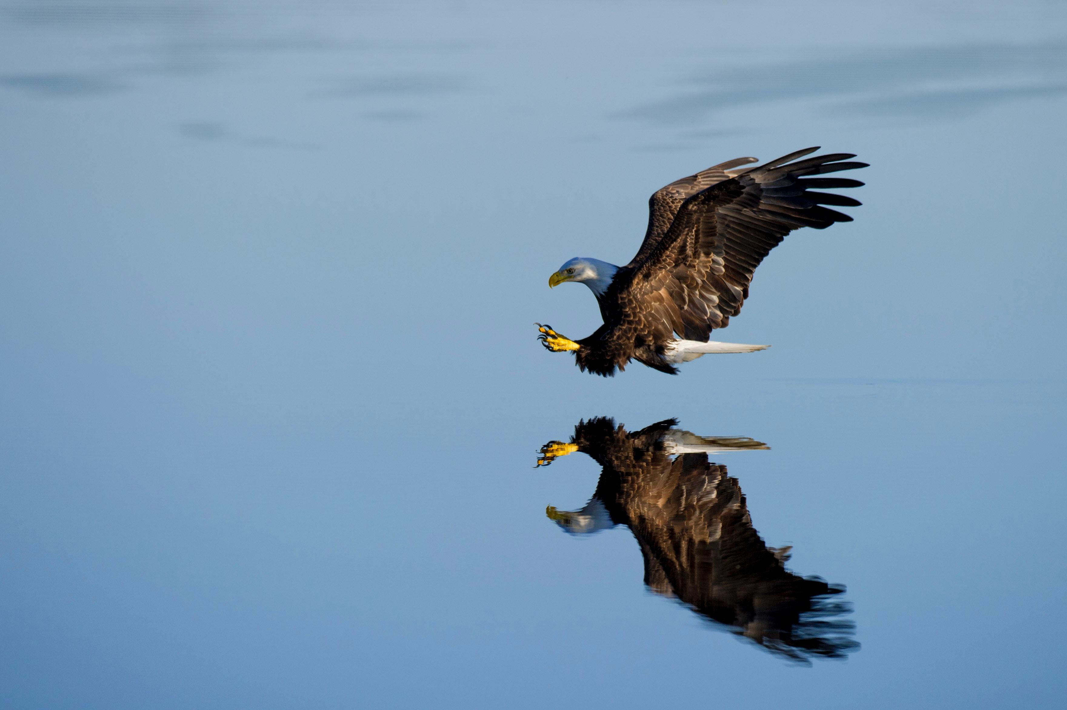 aigle-photo.jpg
