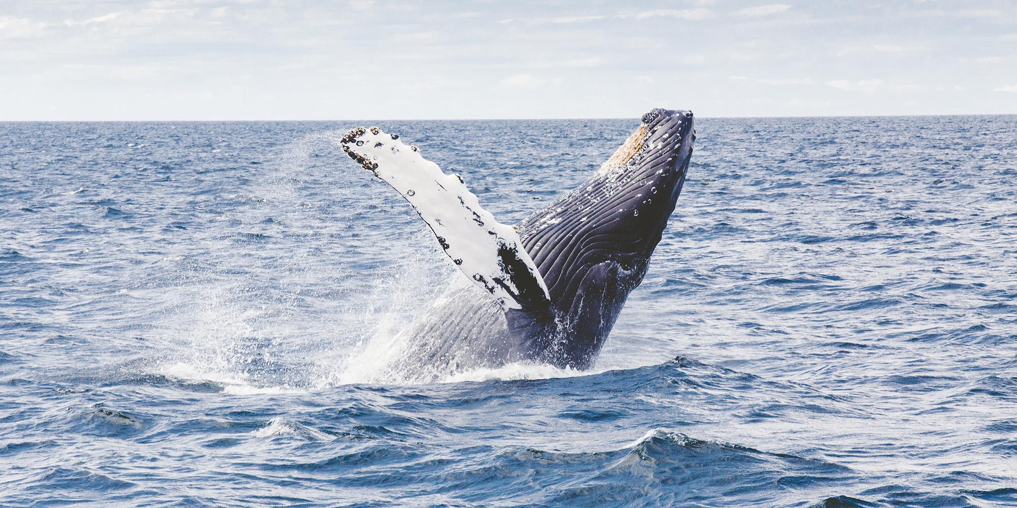baleine-photo.jpg