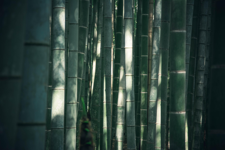 bambou-photo.jpg