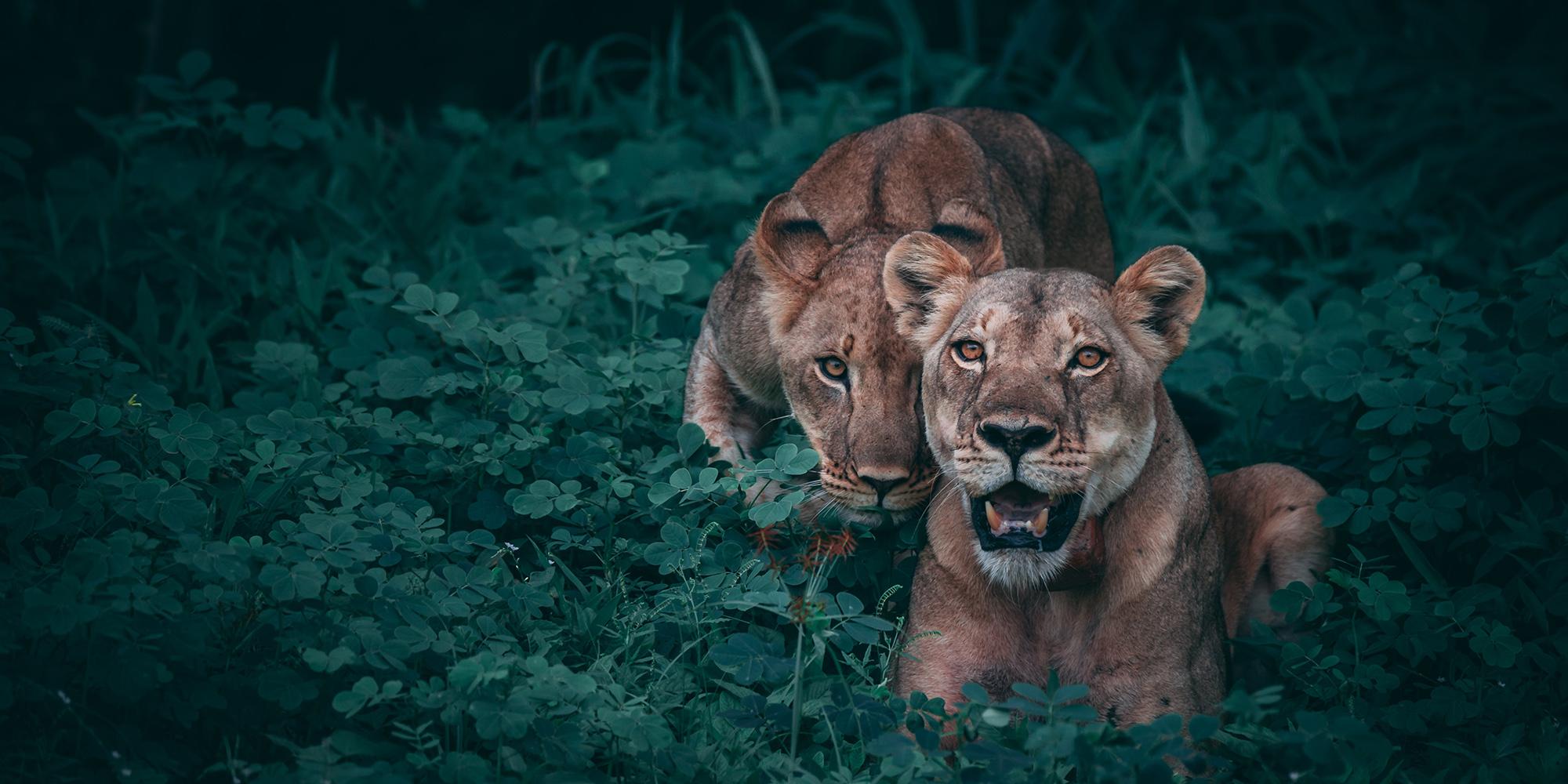 lion-photo.jpg