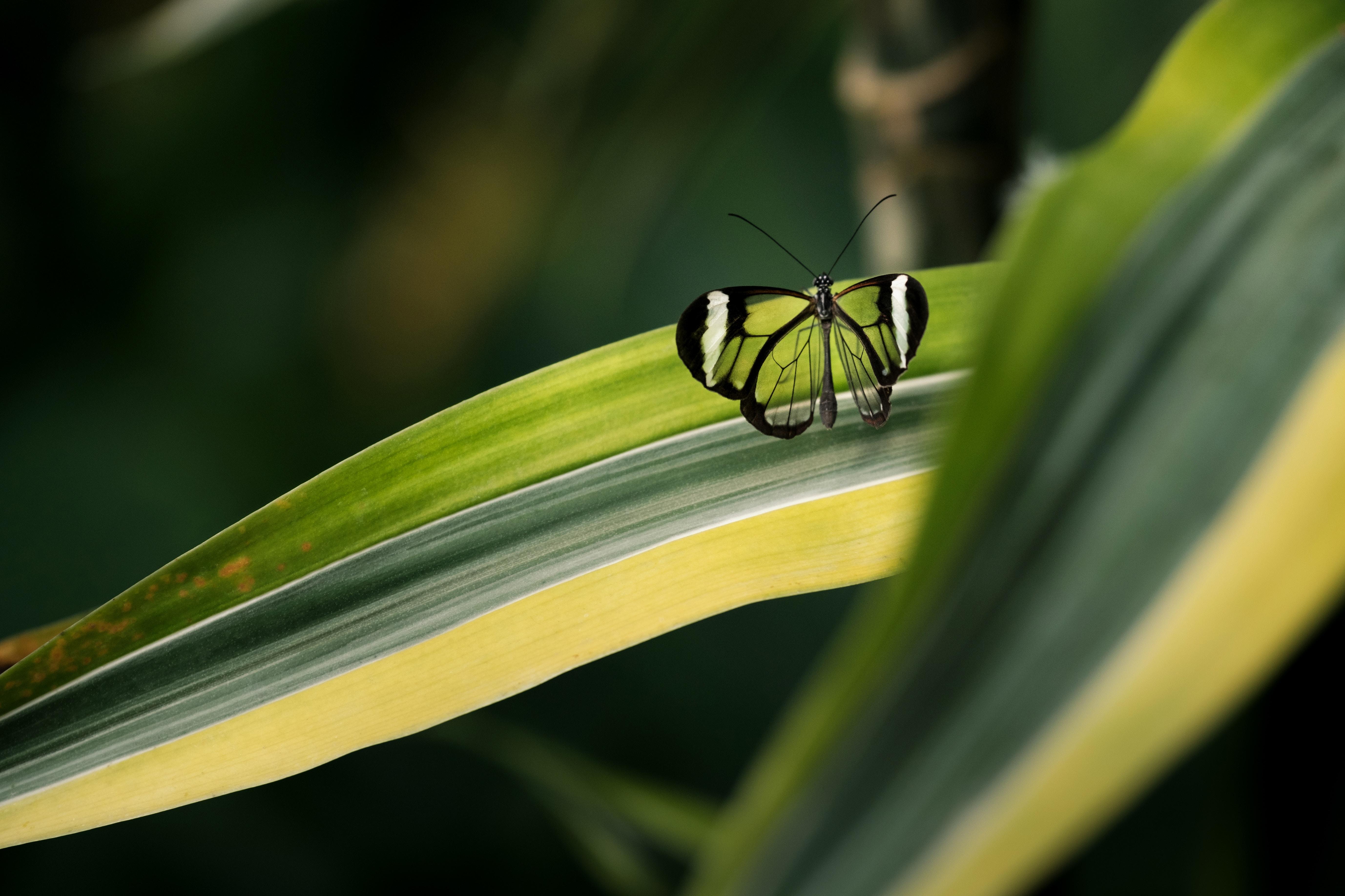 papillon-photo.jpg