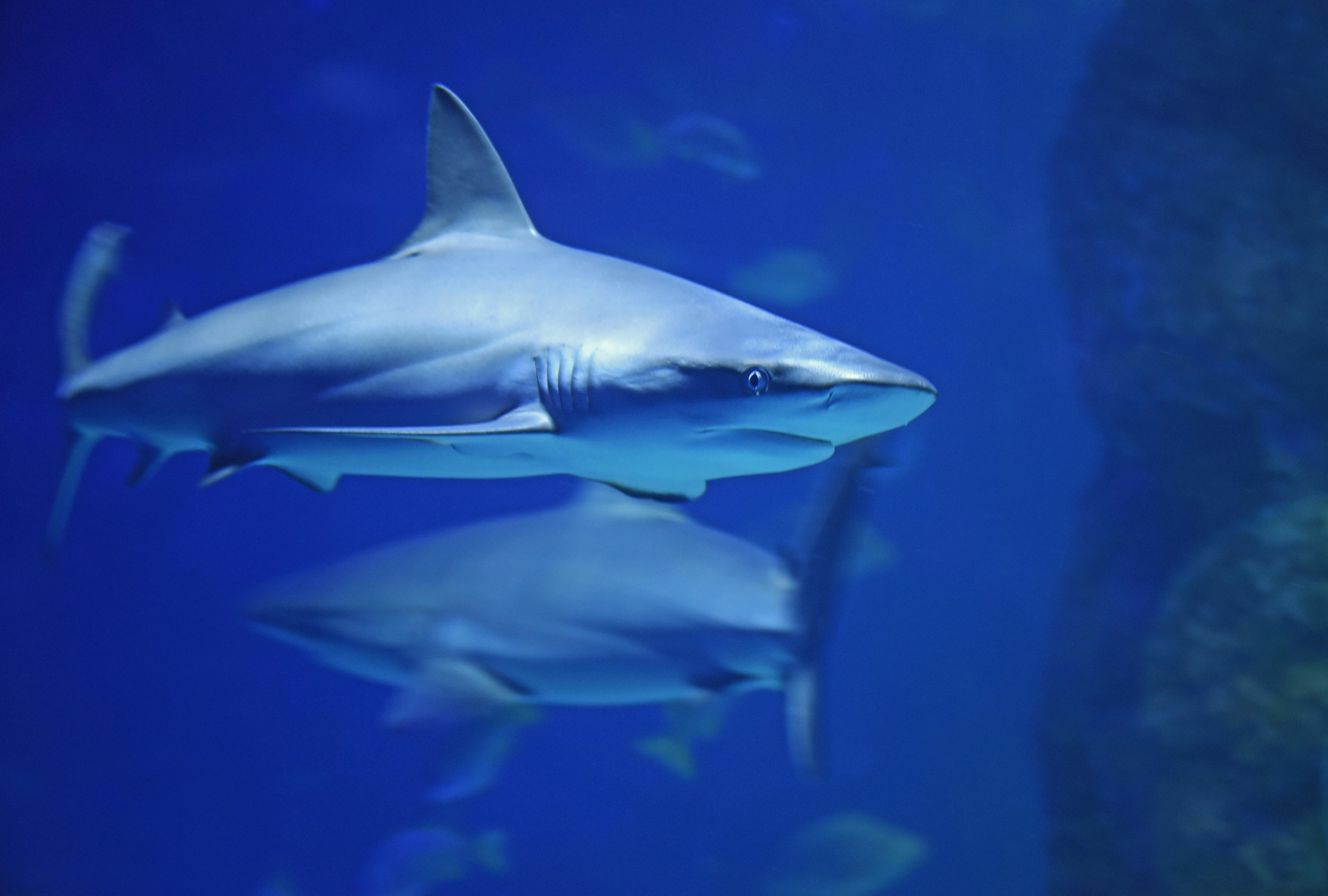 requin-photo.jpg