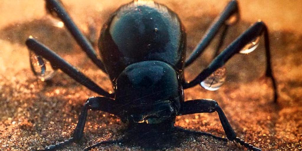 scarabee-photo.jpg