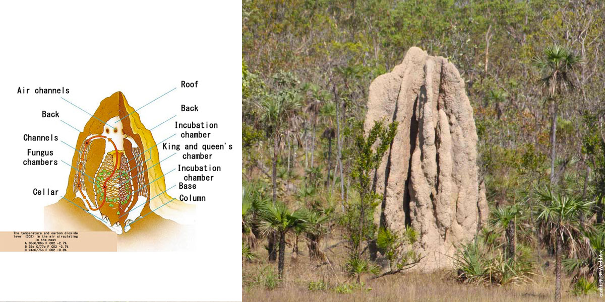 termitière-photo.jpg